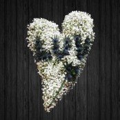 Loose Heart - HEA22