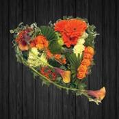 Orange Elegance - HEA96