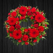 Red Scarlet - WRE24