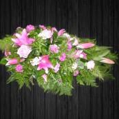 Pink Pine - SPR42