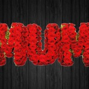Massed Roses - MUM2