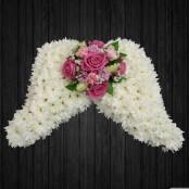 Angel Wings In Pinks