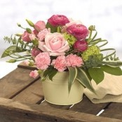Posy Pink