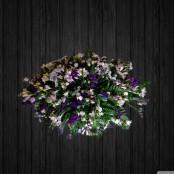 Purple Shades - CSK43