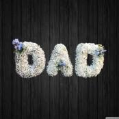 Gypsophilia Dad - DAD65